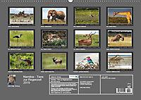 Namibia - Tiere zur Regenzeit 2019 (Wandkalender 2019 DIN A2 quer) - Produktdetailbild 13