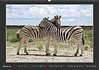 Namibia - Tiere zur Regenzeit 2019 (Wandkalender 2019 DIN A2 quer) - Produktdetailbild 1