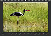 Namibia - Tiere zur Regenzeit 2019 (Wandkalender 2019 DIN A2 quer) - Produktdetailbild 5