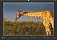 Namibia - Tiere zur Regenzeit 2019 (Wandkalender 2019 DIN A2 quer) - Produktdetailbild 4