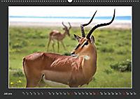 Namibia - Tiere zur Regenzeit 2019 (Wandkalender 2019 DIN A2 quer) - Produktdetailbild 7