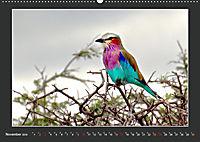Namibia - Tiere zur Regenzeit 2019 (Wandkalender 2019 DIN A2 quer) - Produktdetailbild 11