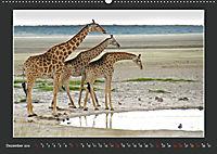 Namibia - Tiere zur Regenzeit 2019 (Wandkalender 2019 DIN A2 quer) - Produktdetailbild 12