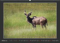 Namibia - Tiere zur Regenzeit 2019 (Wandkalender 2019 DIN A2 quer) - Produktdetailbild 10