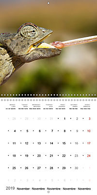 Namibia - Wonders of Nature (Wall Calendar 2019 300 × 300 mm Square) - Produktdetailbild 11