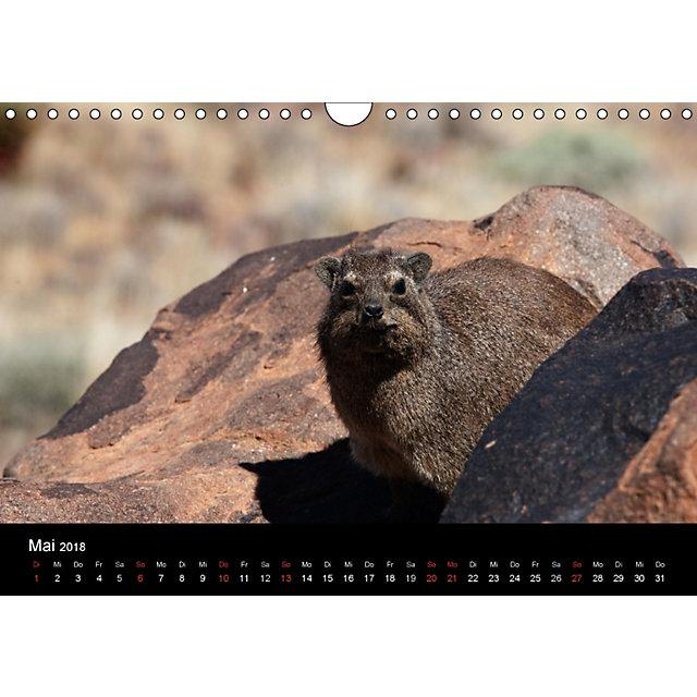 namibias tiere von gross bis klein wandkalender 2018 din a4 quer kalender bestellen. Black Bedroom Furniture Sets. Home Design Ideas