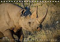 Nashörner - Afrikas seltene Dickhäuter (Tischkalender 2019 DIN A5 quer) - Produktdetailbild 7