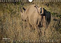 Nashörner - Afrikas seltene Dickhäuter (Wandkalender 2019 DIN A4 quer) - Produktdetailbild 10
