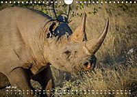 Nashörner - Afrikas seltene Dickhäuter (Wandkalender 2019 DIN A4 quer) - Produktdetailbild 7