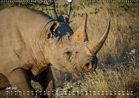 Nashörner - Afrikas seltene Dickhäuter (Wandkalender 2019 DIN A2 quer) - Produktdetailbild 7