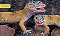 National Geographic KiDS: Alles über - Reptilien - Produktdetailbild 2