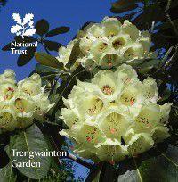 National Trust Guidebooks: Trengwainton Garden, Katherine Lambert