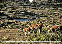 Nationalpark Torres del Paine, eine Traumlandschaft (Wandkalender 2019 DIN A4 quer) - Produktdetailbild 3