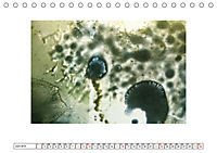 NATÜRLICH BUNT (Tischkalender 2019 DIN A5 quer) - Produktdetailbild 6
