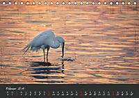 Natur erleben Seewinkel-Neusiedlersee (Tischkalender 2019 DIN A5 quer) - Produktdetailbild 2