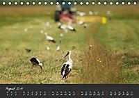Natur erleben Seewinkel-Neusiedlersee (Tischkalender 2019 DIN A5 quer) - Produktdetailbild 8