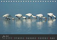 Natur erleben Seewinkel-Neusiedlersee (Tischkalender 2019 DIN A5 quer) - Produktdetailbild 7