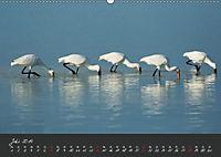 Natur erleben Seewinkel-Neusiedlersee (Wandkalender 2019 DIN A2 quer) - Produktdetailbild 7