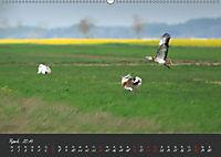 Natur erleben Seewinkel-Neusiedlersee (Wandkalender 2019 DIN A2 quer) - Produktdetailbild 4