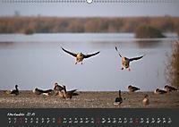 Natur erleben Seewinkel-Neusiedlersee (Wandkalender 2019 DIN A2 quer) - Produktdetailbild 11