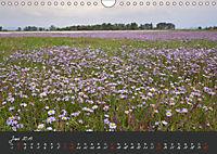Natur erleben Seewinkel-Neusiedlersee (Wandkalender 2019 DIN A4 quer) - Produktdetailbild 6
