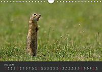 Natur erleben Seewinkel-Neusiedlersee (Wandkalender 2019 DIN A4 quer) - Produktdetailbild 5