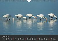 Natur erleben Seewinkel-Neusiedlersee (Wandkalender 2019 DIN A4 quer) - Produktdetailbild 7