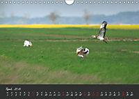 Natur erleben Seewinkel-Neusiedlersee (Wandkalender 2019 DIN A4 quer) - Produktdetailbild 4