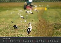Natur erleben Seewinkel-Neusiedlersee (Wandkalender 2019 DIN A4 quer) - Produktdetailbild 8