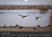 Natur erleben Seewinkel-Neusiedlersee (Wandkalender 2019 DIN A4 quer) - Produktdetailbild 11
