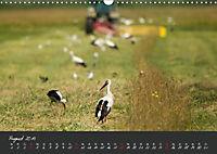 Natur erleben Seewinkel-Neusiedlersee (Wandkalender 2019 DIN A3 quer) - Produktdetailbild 8