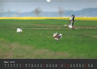 Natur erleben Seewinkel-Neusiedlersee (Wandkalender 2019 DIN A3 quer) - Produktdetailbild 4