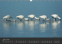 Natur erleben Seewinkel-Neusiedlersee (Wandkalender 2019 DIN A3 quer) - Produktdetailbild 7