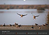 Natur erleben Seewinkel-Neusiedlersee (Wandkalender 2019 DIN A3 quer) - Produktdetailbild 11