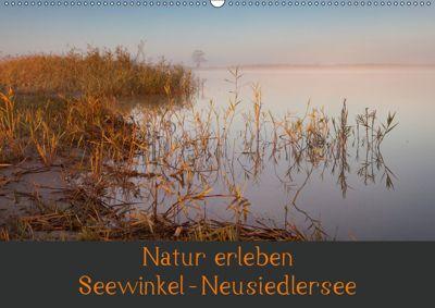 Natur erleben Seewinkel-Neusiedlersee (Wandkalender 2019 DIN A2 quer), Johann Schörkhuber