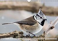 NATUR PUR Heimische Singvögel (Wandkalender 2019 DIN A4 quer) - Produktdetailbild 4