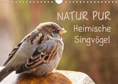 NATUR PUR Heimische Singvögel (Wandkalender 2019 DIN A4 quer), Karin Dietzel