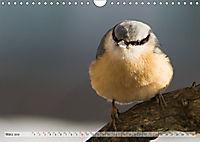 NATUR PUR Heimische Singvögel (Wandkalender 2019 DIN A4 quer) - Produktdetailbild 3