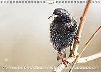 NATUR PUR Heimische Singvögel (Wandkalender 2019 DIN A4 quer) - Produktdetailbild 2