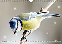 NATUR PUR Heimische Singvögel (Wandkalender 2019 DIN A4 quer) - Produktdetailbild 1