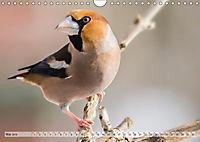 NATUR PUR Heimische Singvögel (Wandkalender 2019 DIN A4 quer) - Produktdetailbild 5