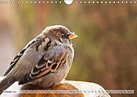 NATUR PUR Heimische Singvögel (Wandkalender 2019 DIN A4 quer) - Produktdetailbild 10