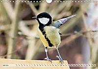 NATUR PUR Heimische Singvögel (Wandkalender 2019 DIN A4 quer) - Produktdetailbild 7