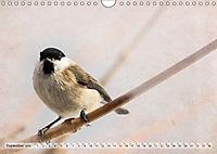 NATUR PUR Heimische Singvögel (Wandkalender 2019 DIN A4 quer) - Produktdetailbild 9