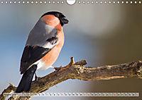 NATUR PUR Heimische Singvögel (Wandkalender 2019 DIN A4 quer) - Produktdetailbild 8