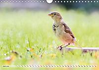 NATUR PUR Heimische Singvögel (Wandkalender 2019 DIN A4 quer) - Produktdetailbild 6