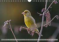 NATUR PUR Heimische Singvögel (Wandkalender 2019 DIN A4 quer) - Produktdetailbild 11