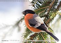 NATUR PUR Heimische Singvögel (Wandkalender 2019 DIN A4 quer) - Produktdetailbild 12