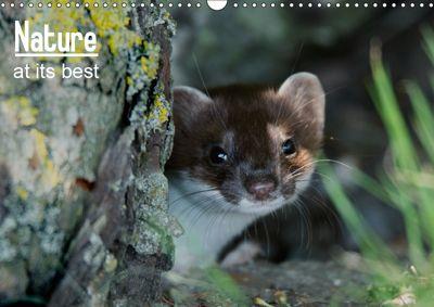 Nature at its best (Wall Calendar 2019 DIN A3 Landscape), Mart R Porter