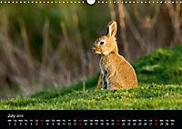 Nature at its best (Wall Calendar 2019 DIN A3 Landscape) - Produktdetailbild 7